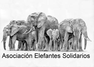 elefantes solidarios Titulo